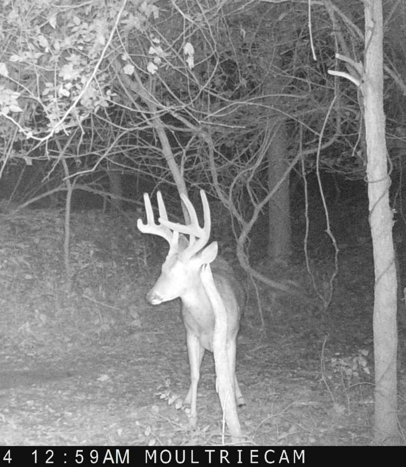 2014 Trail Cam Photos