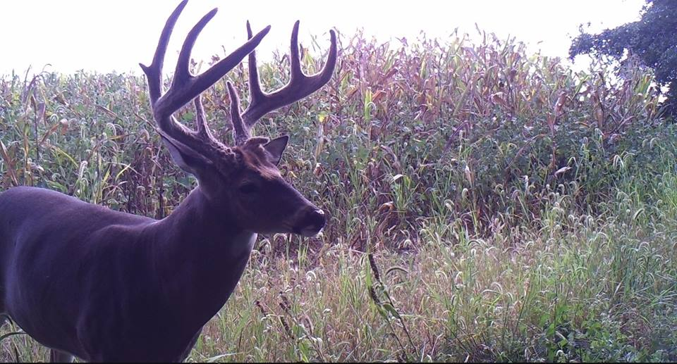 2018 Trail Cam Photos